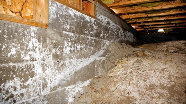 5 Tips For Fighting Mold Humidity Beachfront Builders